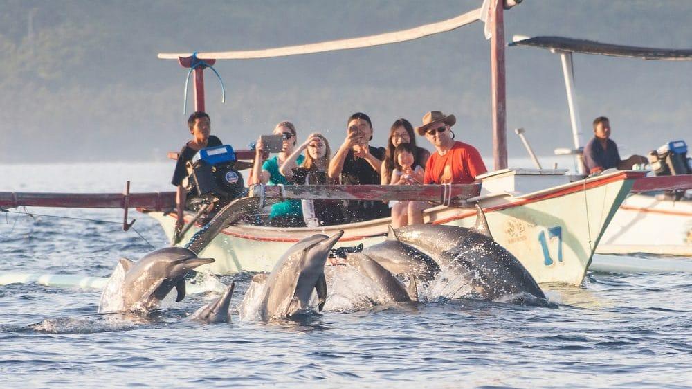 dauphins bali