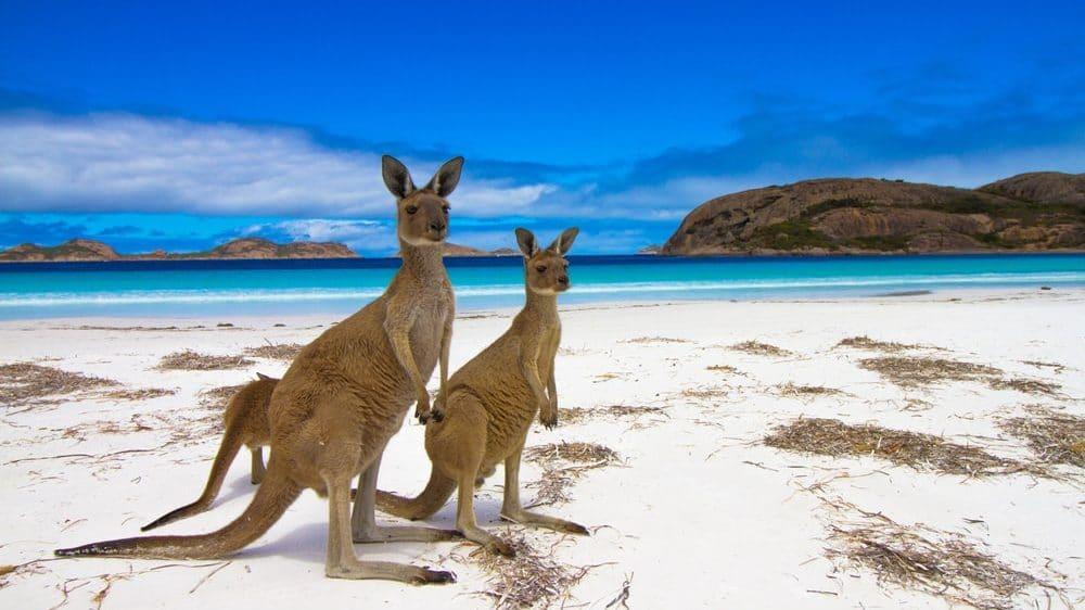 australie iles kangourous